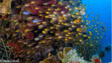 2014_06_nord_sulawesi3370