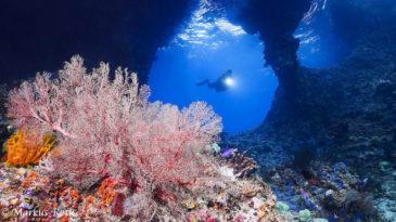 Tauchen in / Diving in Raja Ampat / West Papua /Indonesia / Indonesien / Indonesia