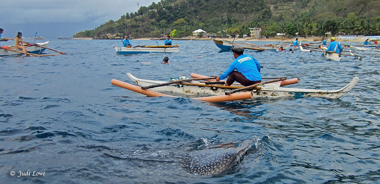 The Philippines – Oslob Whale Sharks