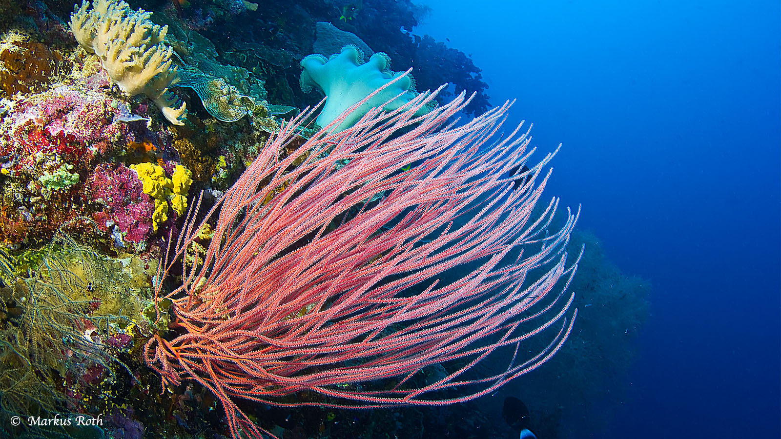 What does the dive tourist care about?